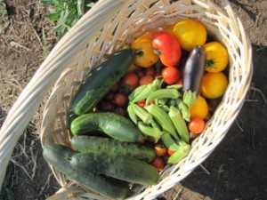 picture of harvest basket